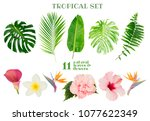 tropical green fresh leaves and ...   Shutterstock . vector #1077622349