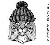 wild cat lynx bobcat trot cool... | Shutterstock .eps vector #1077691019