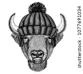 Buffalo  Bison Ox  Bull Cool...