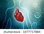 3d illustration  anatomy of...   Shutterstock . vector #1077717884