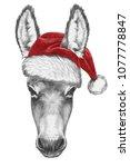 Portrait Of Donkey With Santa...