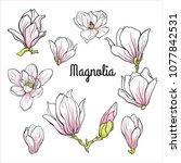 set of magnolia flowers.... | Shutterstock .eps vector #1077842531