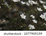 beautiful flowers in spring | Shutterstock . vector #1077905159