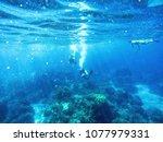scuba divers and snorkler in... | Shutterstock . vector #1077979331