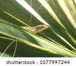 lizard in plant | Shutterstock . vector #1077997244
