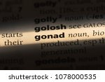 Small photo of gonad word in a dictionary. gonad concept