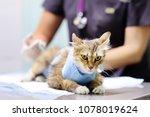female veterinary doctor giving ... | Shutterstock . vector #1078019624