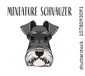 dog miniature schnauzer breed.... | Shutterstock .eps vector #1078093091
