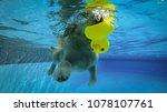 golden retriever puppy... | Shutterstock . vector #1078107761