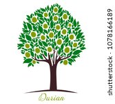 durian tree isolated on a white ... | Shutterstock . vector #1078166189