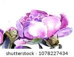 peonies watercolor. background | Shutterstock . vector #1078227434