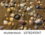 seashells on a beach of the... | Shutterstock . vector #1078245347