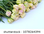 tulip finola terry early pink... | Shutterstock . vector #1078264394