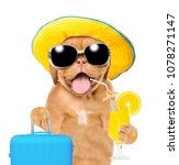 Funny Puppy In Summer Hat With...