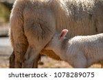 merthyr tydfil  wales   april... | Shutterstock . vector #1078289075