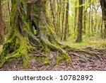 Moss Covered Oak Tree Trunk An...