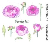 ink  pencil  watercolor peonies ... | Shutterstock .eps vector #1078301531