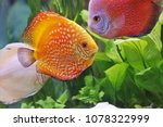 red and white discus in... | Shutterstock . vector #1078322999
