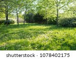 trees and grass in backyard | Shutterstock . vector #1078402175