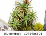 nice green flower | Shutterstock . vector #1078406501
