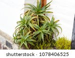 nice green flower | Shutterstock . vector #1078406525