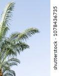 green palm tree leaves against...   Shutterstock . vector #1078436735