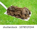 Raw Compost Horse Manure On A...