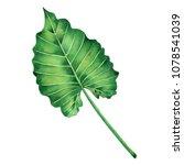 watercolor painting big green... | Shutterstock . vector #1078541039