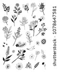 set of illustrations of flowers.... | Shutterstock . vector #1078647581
