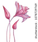 abstract flowers. hand painted... | Shutterstock . vector #1078729769