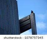 Small photo of modern wooden wall exterior architectural concept and a little raven bird for size perspective