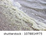 Sea Wave With Dirty Foam On Th...