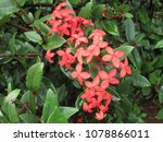 beauty of flowers | Shutterstock . vector #1078866011