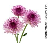 Purple Flower Isolated On Whit...