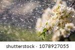 spring rain in the garden.... | Shutterstock . vector #1078927055