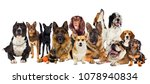 group of dogs on a white...   Shutterstock . vector #1078940834