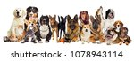 group of dogs on a white...   Shutterstock . vector #1078943114