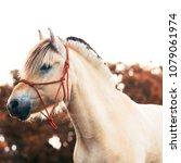 Norwegian Fjord Horse Bokeh...