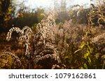 bright golden sunlight through... | Shutterstock . vector #1079162861
