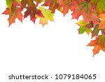 frame border of autumn maple... | Shutterstock . vector #1079184065