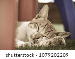 the domestic cat  egypt. | Shutterstock . vector #1079202209