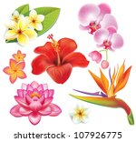 set of tropical flowers | Shutterstock .eps vector #107926775