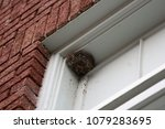 Wasp nest in window