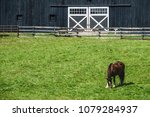 Small photo of Brown horse (trinomial name: Equus ferus caballus) grazing in paddock near vintage black horse barn with white doors on a sunny day in Kentucky bluegrass country, for rural and agricultural motifs