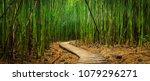 A Path Winds Through A Bamboo...