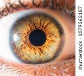green detailed eye | Shutterstock . vector #1079362187