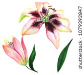 beautiful exotic lilies in...   Shutterstock . vector #1079392847