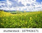 scenic view of field of... | Shutterstock . vector #1079426171