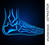 foot anatomy. ankle x ray.... | Shutterstock .eps vector #1079437529