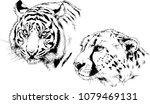 vector drawings sketches... | Shutterstock .eps vector #1079469131